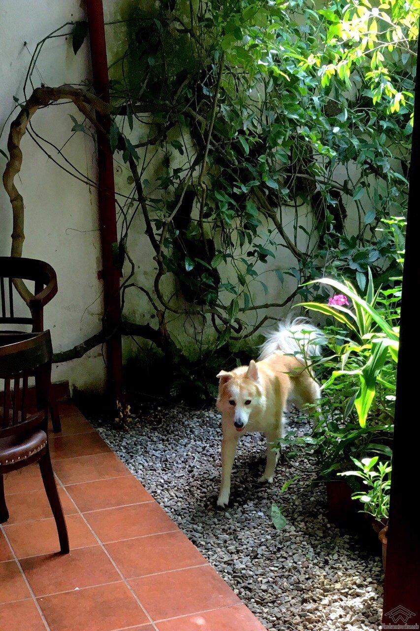 Tourette Hund Willkommen Im Zwielicht